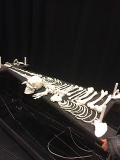 Xylofon av ett skelett