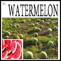 Water Melon Varieties