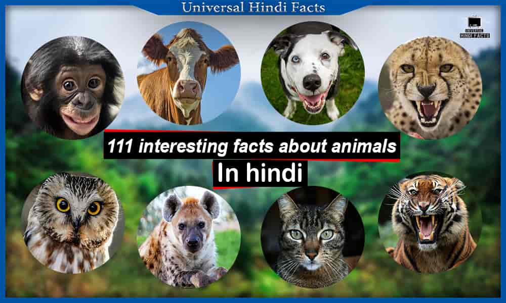 interesting facts about animals, जानवरों से जुड़े रोचक तथ्य, amazing facts about animals, interesting facts about animals and humans, some interesting facts about animals, interesting facts about animals with pictures, universalhindifacts