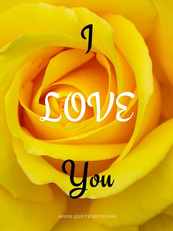 I Love You Images with Yellow Rose