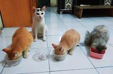 Tips Memelihara Kucing Murah Tanpa Kandang