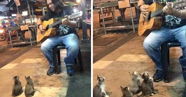 Άντρας έπαιζε μουσική μόνος του στον δρόμο και όλοι τον αγνοούσαν. Μέχρι που εμφανίστηκαν αυτά τα 4 γατάκια
