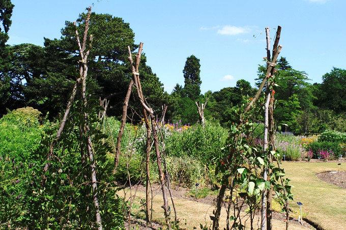 The Wayfarer - Cambridge Botanic Gardens