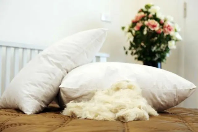 Tidur Nyenyak dengan Bantal Dacron