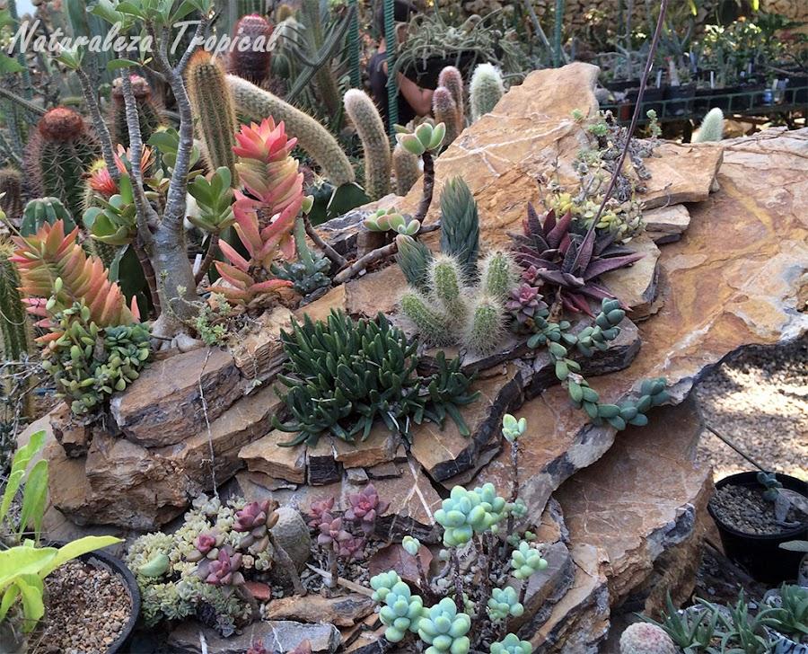 Pequeño desierto elaborado como decoración en un jardín