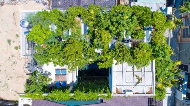 Nhà đẹp kết hợp vườn cây xanh trên sân thượng ngợp bóng mát
