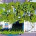 Kiến trúc xanh kết hợp nhà phố đẹp tạo ra ngôi nhà rợm bóng mát