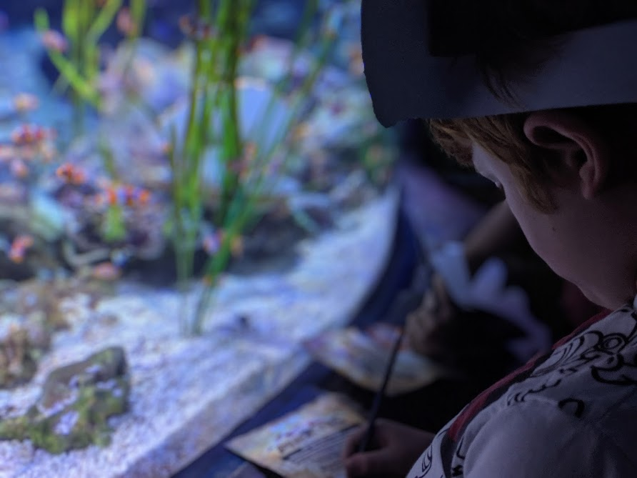What to do when it rains in North East England | 20+ places to visit with kids - all accessible via public transport - Blue Reef Aquarium Tynemouth