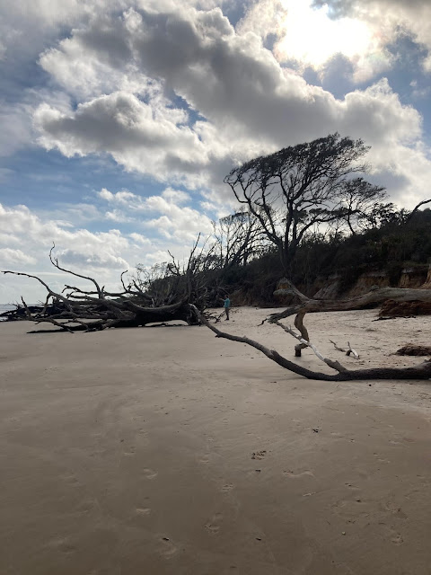 Large, bare trees on a beach shore. Human figure in distant background.