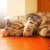 ⓩ★貓咪特輯,週末就來當一坨渣渣吧_(┐「ε:)_