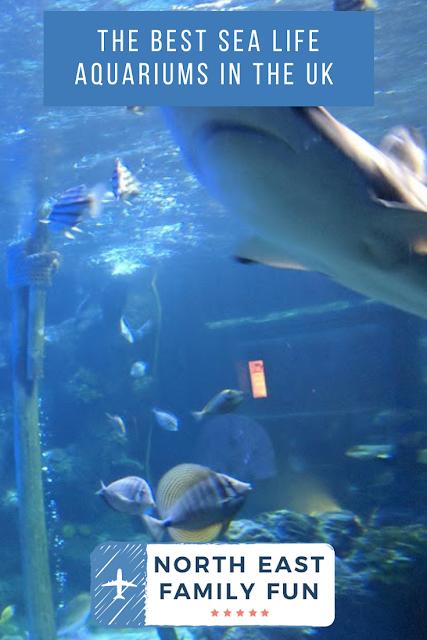 The Best Sea Life Aquariums in the UK