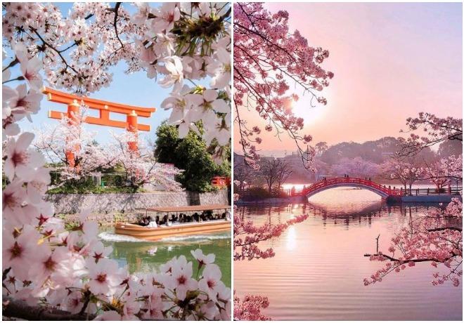proljeće_japan_cvijet-trešnje_sakura