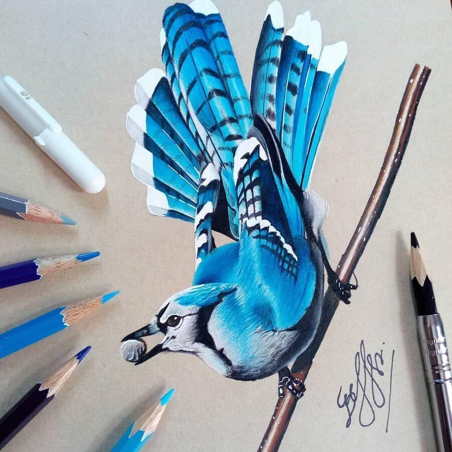 01-Bele-Birds-Drawings-www-designstack-co
