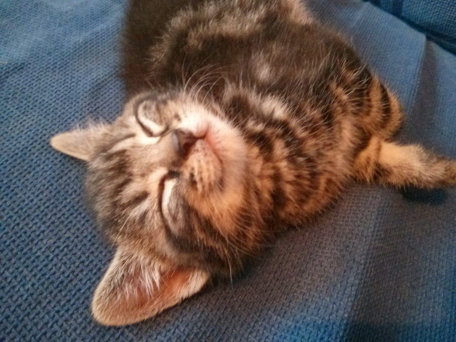 Mario The Smiling Kitten