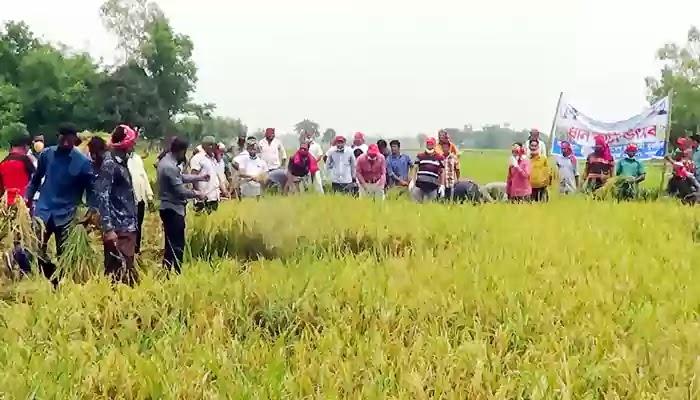 শ্রীবরদীতে দরিদ্র কৃষকদের ধান কেটে দিচ্ছে যুবলীগ