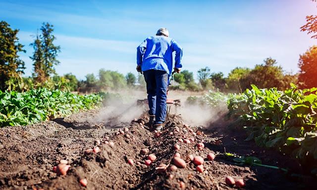 Proyectos de Reconversión Productiva Agropecuaria