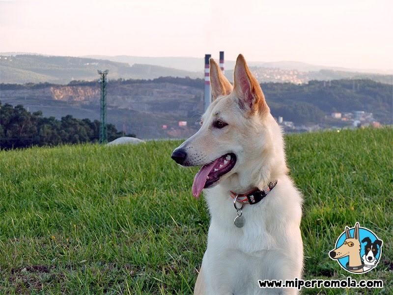 Can de Palleiro en la cima del Parque de Bens