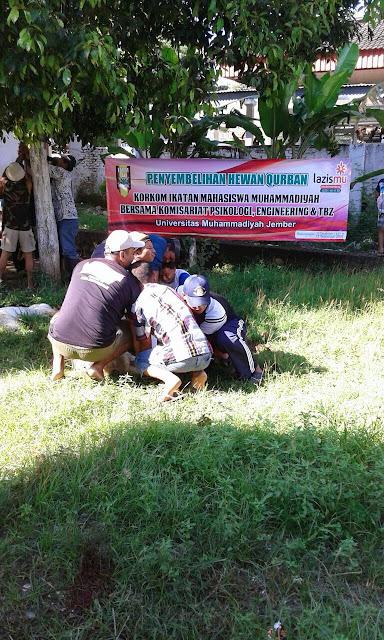 Panitia Pelaksanaan Qurban di Rowotengah - Sumberbaru