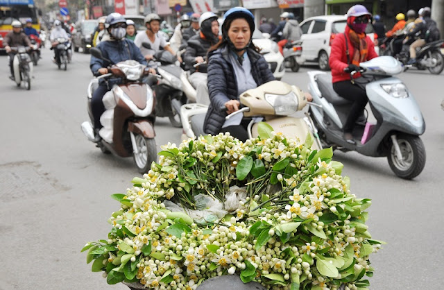 Hanoi scented with grapefruit flowers 7