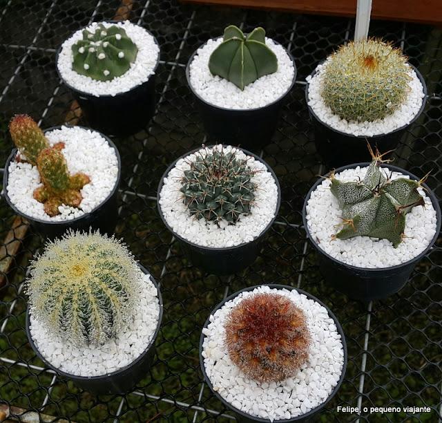 le jardin parque de lavanda gramado