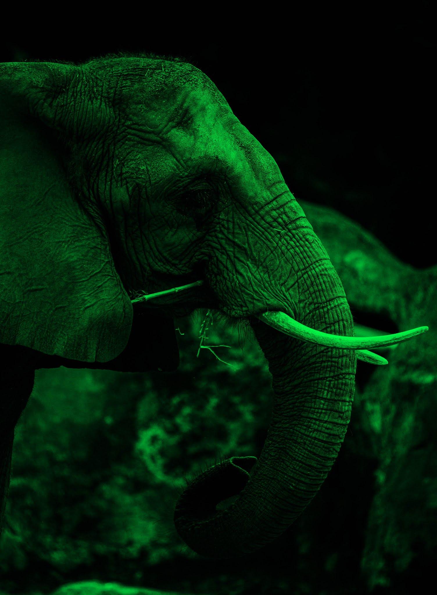 Green light elephant photo