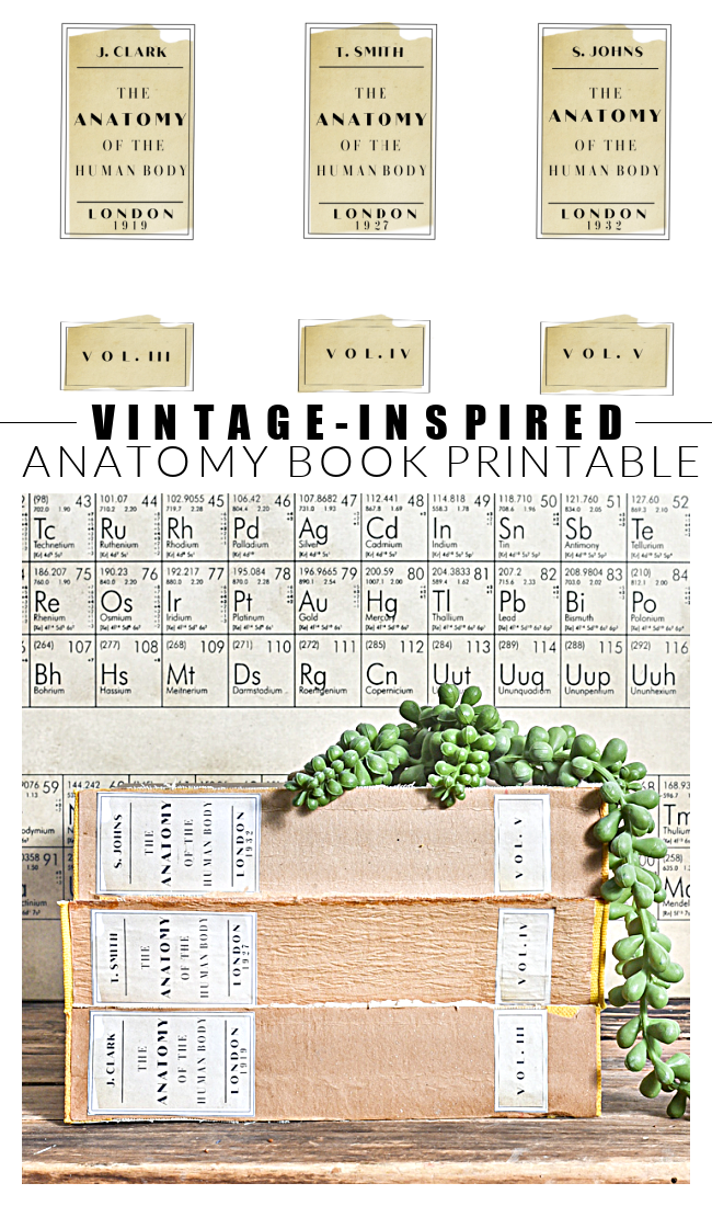 DIY vintage-inspired books using free anatomy labels