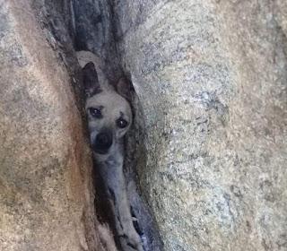 Bombeiros resgatam cão