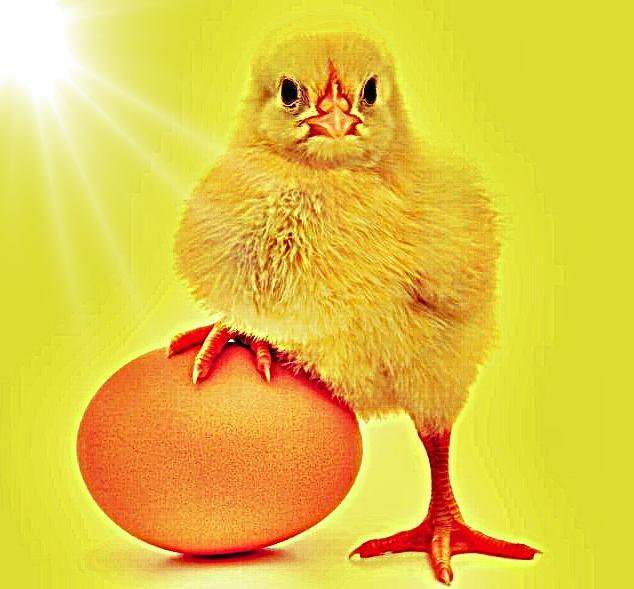 telur apa ayam dulu