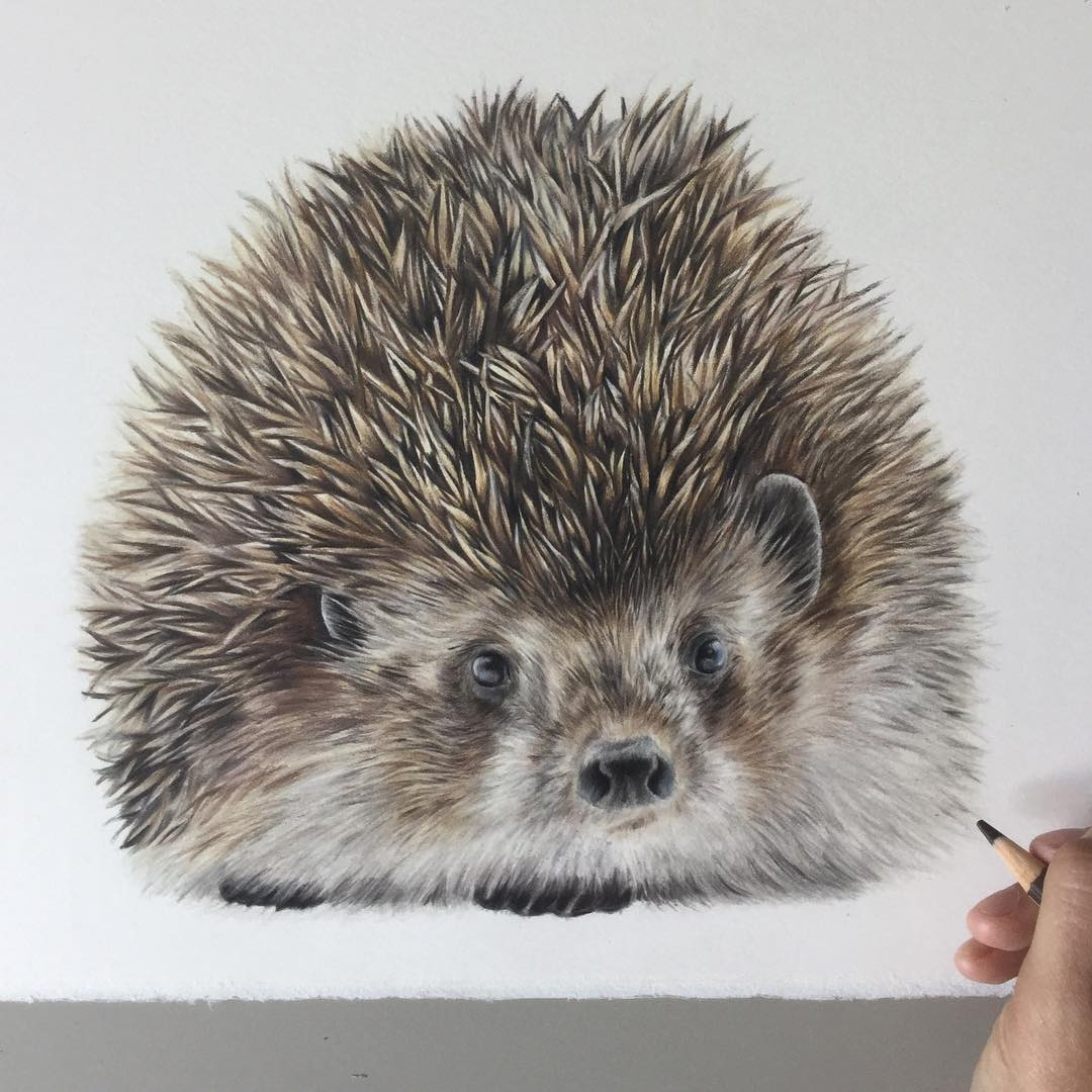 04-Little-Hedgehog-Bethany-Vere-Colored-Pencils-Realistic-Animal-Drawings-www-designstack-co