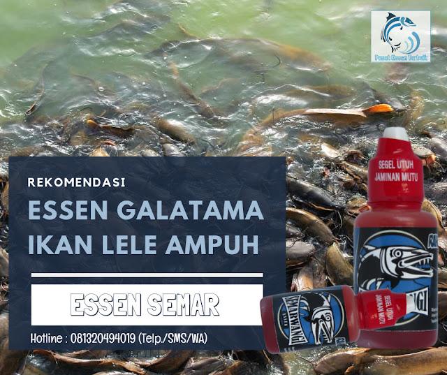 https://pusatessenterbaik.blogspot.com/2019/06/oplosan-essen-galatama-ikan-lele-terbaru-dijamin-neter-terus.html