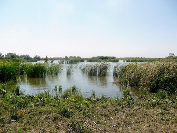 Река Волчья. Ландшафтный заказник «Бакаи