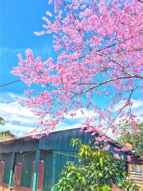 Chiêm ngưỡng vẻ đẹp tuyệt trần của vùng ngoại ô Đà Lạt 6