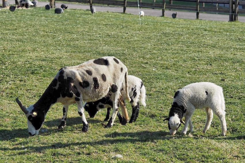 Tiere zotter essbarer tiergarten