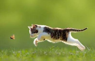 Perilaku Kucing dan Maksudnya