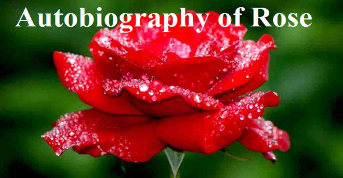 Autobiography of Rose PDF Download