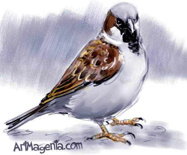 House sparrow  sketch painting. Bird art drawing by illustrator Artmagenta