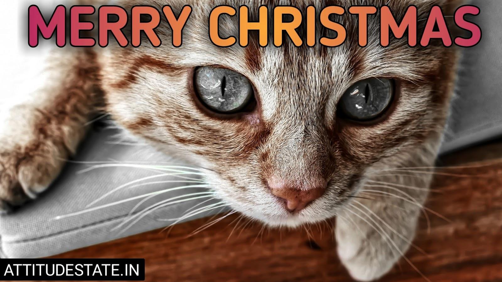 funny merry christmas everyone