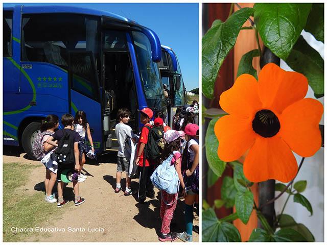 Omníbus/Ojos de poeta (flor)- Chacra Educativa Santa Lucía