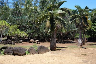 parc avec tortues géantes des seychelles à la vanille au sud de l'île maurice