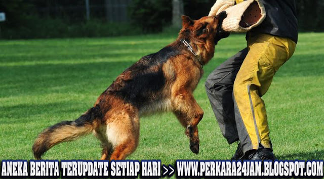 Inilah Penyebab Anjing Peliharaan Menyerang Dan Mengigit Manusia