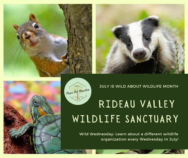 Wild Wednesday: Rideau Valley Wildlife Sanctuary saves lives of orphaned animals #WildWednesday