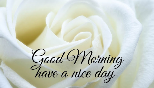 Good Morning have a nice day white rose Image
