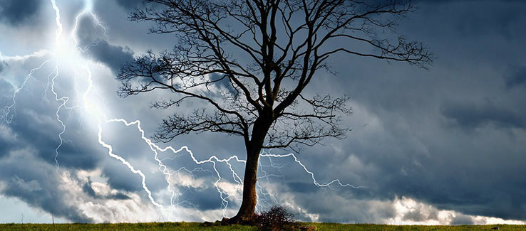 Lightning strikes can severely damage a tree by severing the crown splitting the trunk or causing it to explode