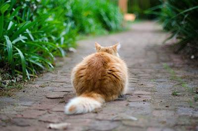 arti-gerakan-ekor-kucing