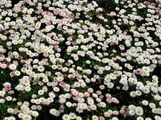 many white flowers photo