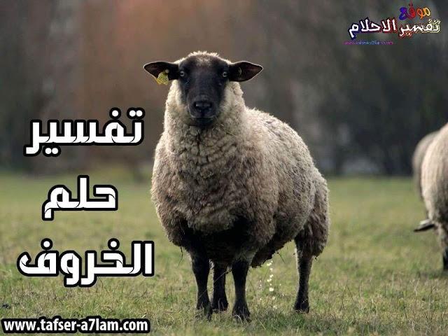 تفسير حلم الخروف في المنام ذبح الخروف في الحلم الجري وراء خروف اللعب مع خروف