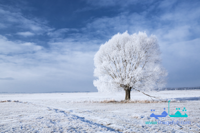 صور مناظر طبيعيه عن الثلوج