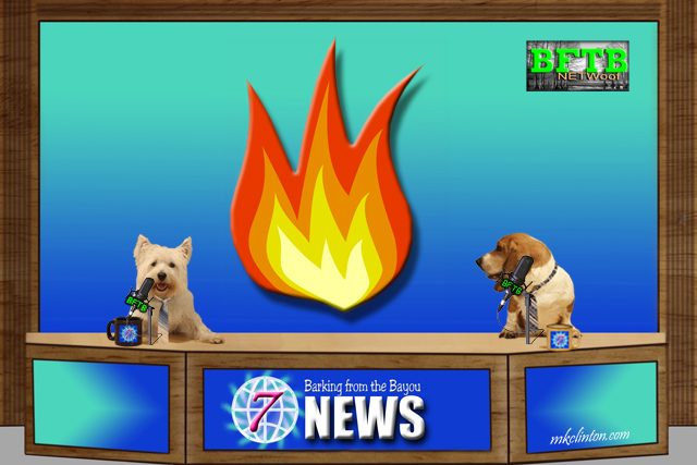 BFTB NETWoof News with dogs anchoring