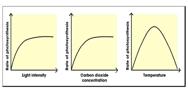Gambar Kurva hubungan 3 faktor eksternal (cahaya, CO2, suhu) terhadap laju fotosintesis tumbuhan