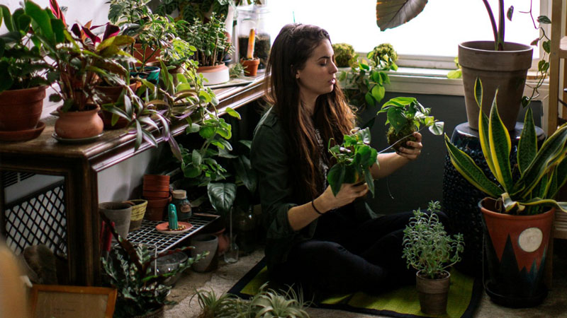 Tips on Caring for Houseplants in the Winter